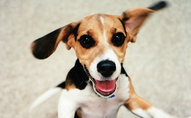 Boldog a kutyád