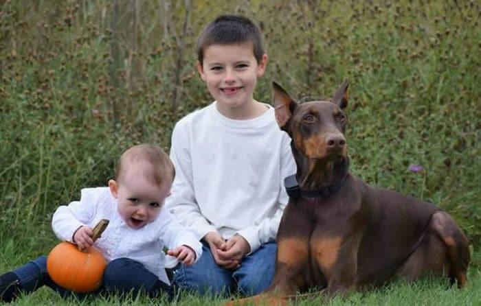 Eladta a játékait a kisfiú, hogy fizesse kutyája orvosi kezelését