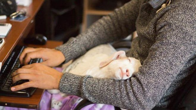 Menhelyek dolgozói osztották meg a legcukibb állatos fotóikat
