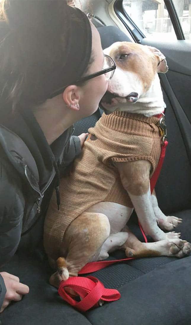 Nem győzi ölelgetni új gazdáját a megmentett pitbull