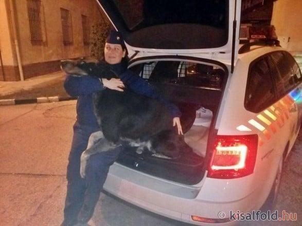 Rendőrségen jelentkezett az elkóborolt kutya Győrben
