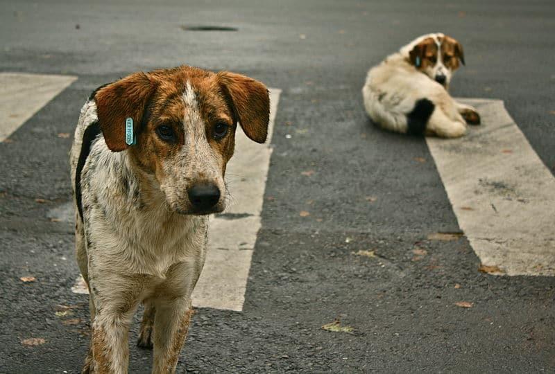 Több empátiát érzünk a kivert kutyák iránt