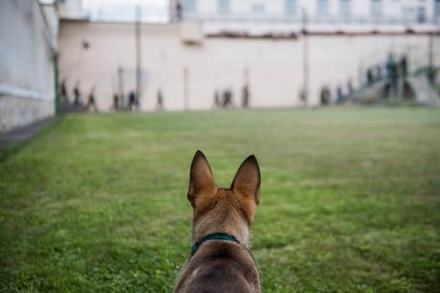 Zserbó, a legfiatalabb drogkereső kutya