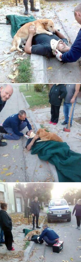 a kutyák törődése páratlan a világon