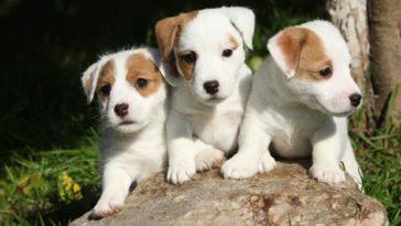 a legtovább élő kutyák