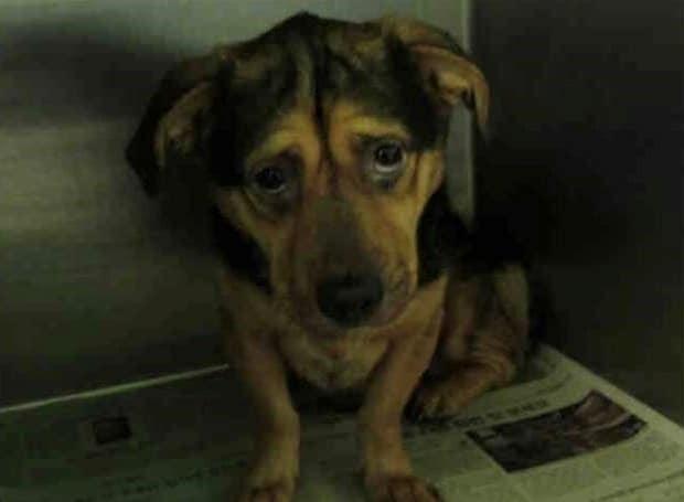 a menhely legszomorúbb kutyáját fogadták örökbe