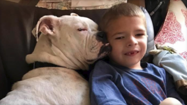 a néma kisfiú és a siket kutya
