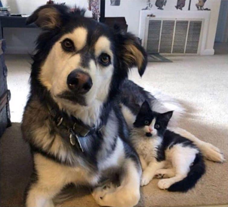 bájos és vicces kiskutyák