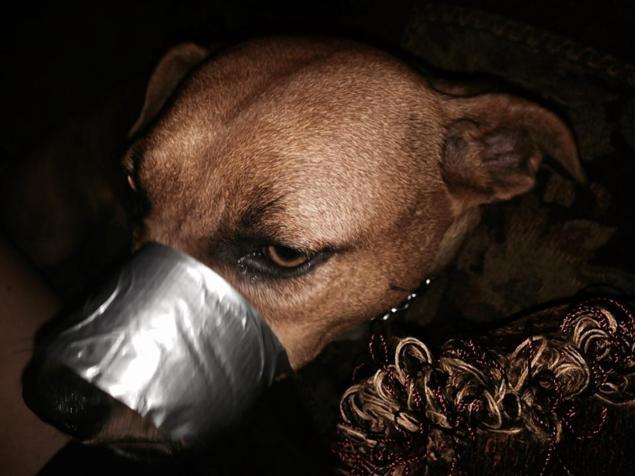 bekötözte a kutya száját