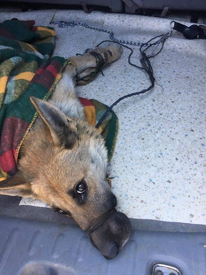dróttal kötözték össze a kutya száját