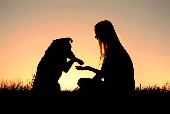 ezért teremtette isten a kutyákat