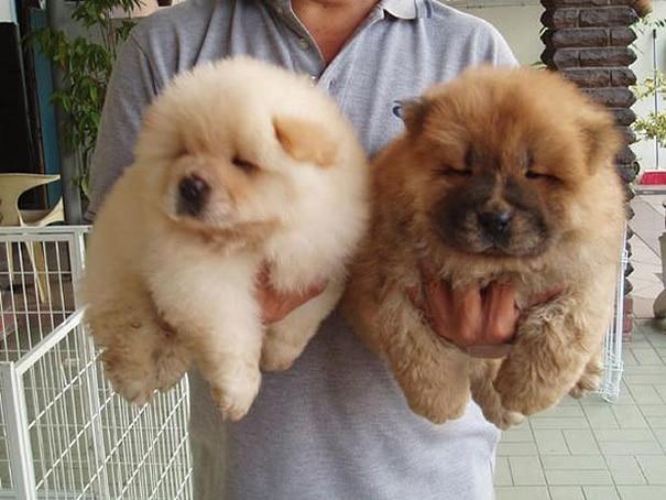 imádnivaló plüssmackó kutyák