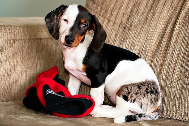 különleges öltözetbe bújt kutyák