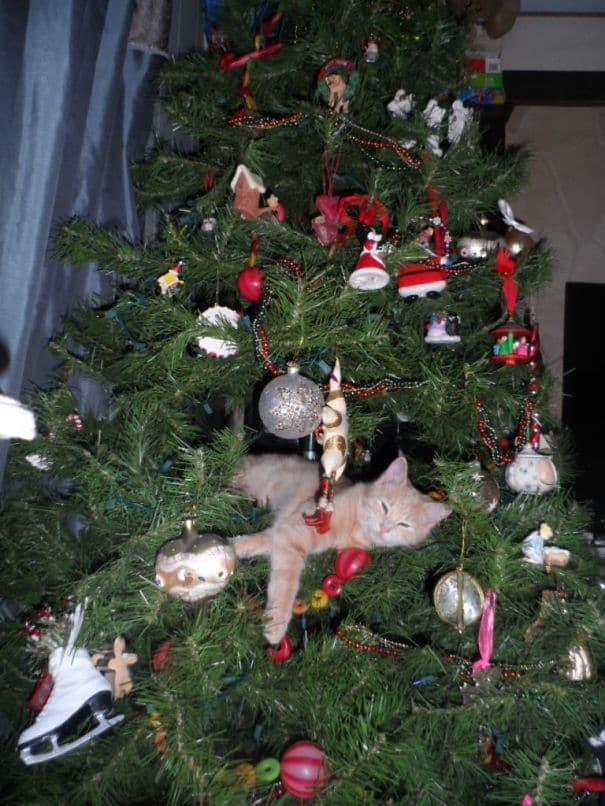 kedvencek elpusztították a karácsonyt