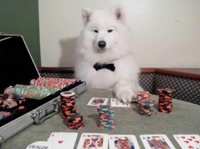 kutyák akik embernek hiszik magukat