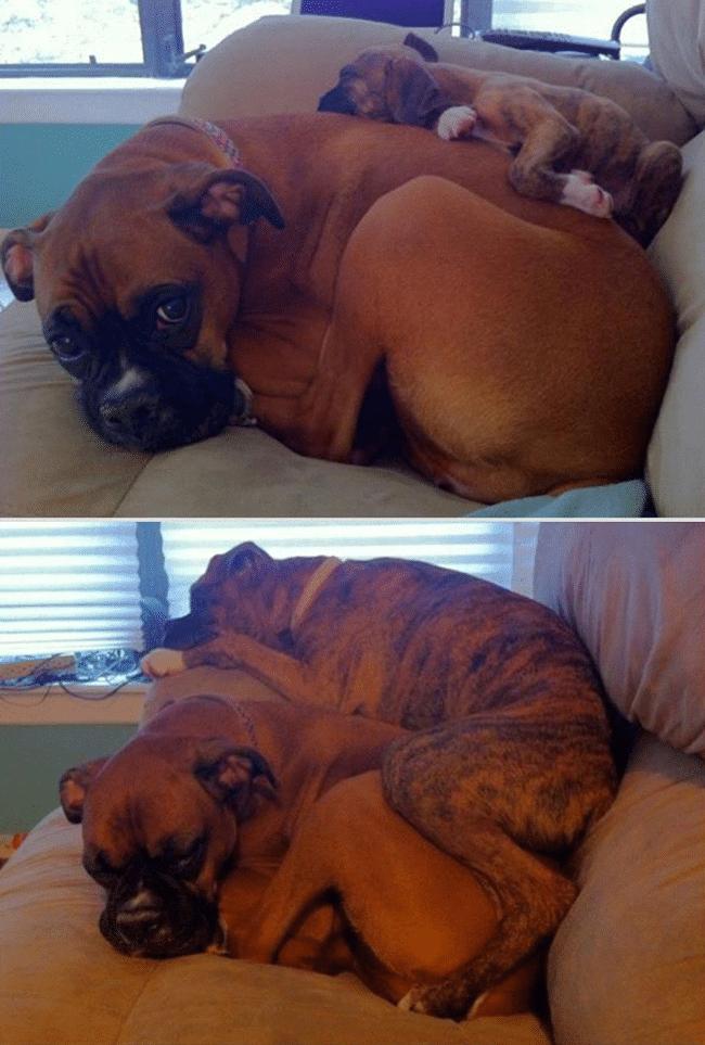 kutyák, akik gyorsan nőnek