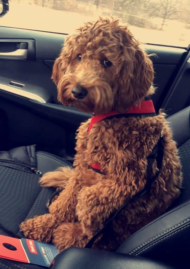 kutyák, akik orvoshoz mentek