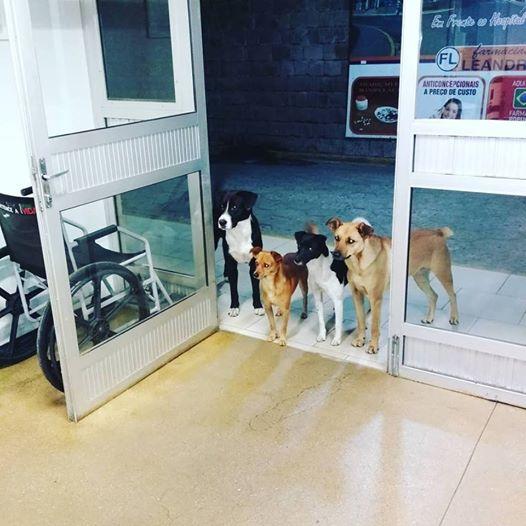 kutyák elkísérték a gazdit a kórházba