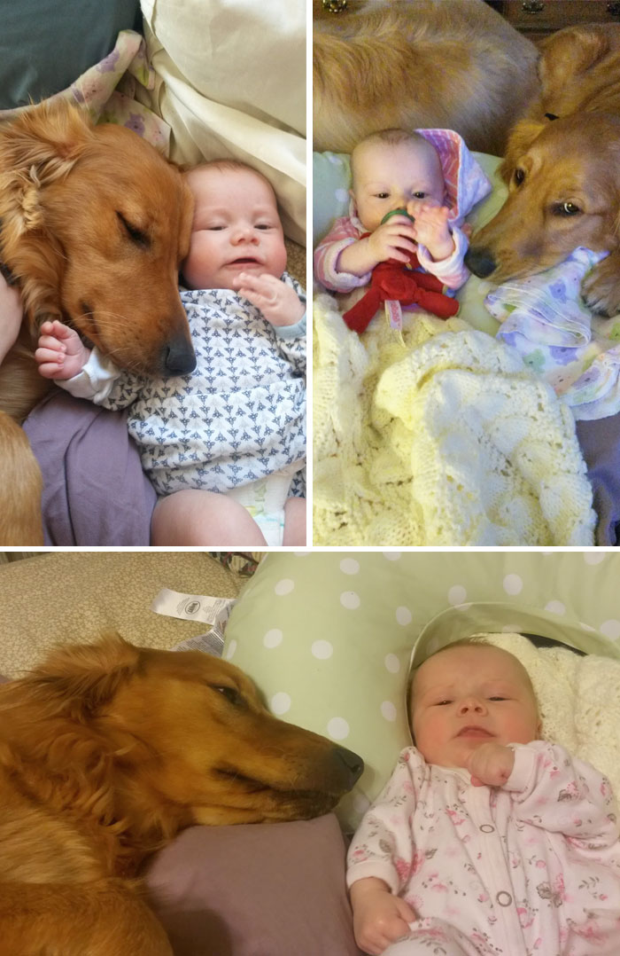 kutya gondoskodik a gazdiról