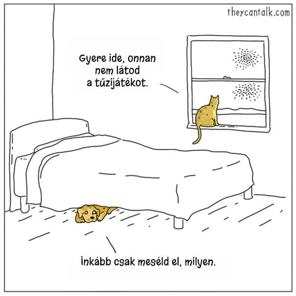 kutya macska különbség