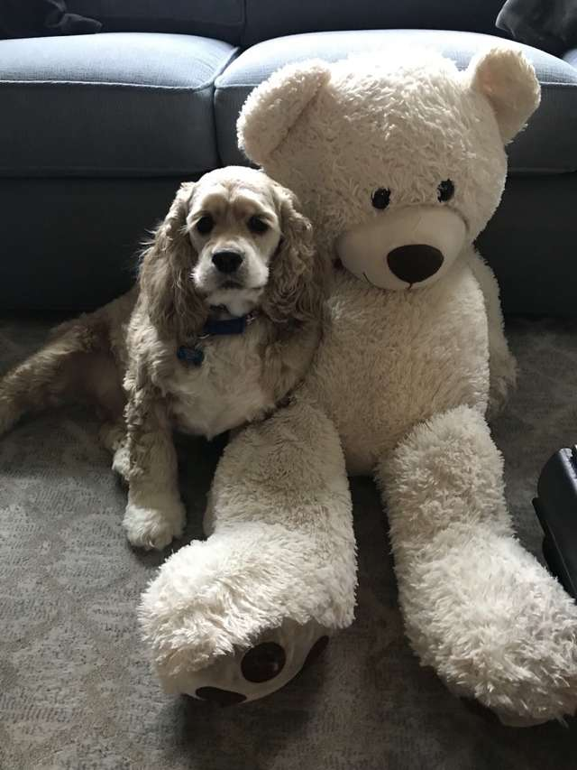 kutya támogatja a barátját