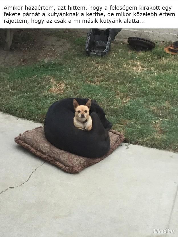 kutyák, akik felrobbantották az internetet