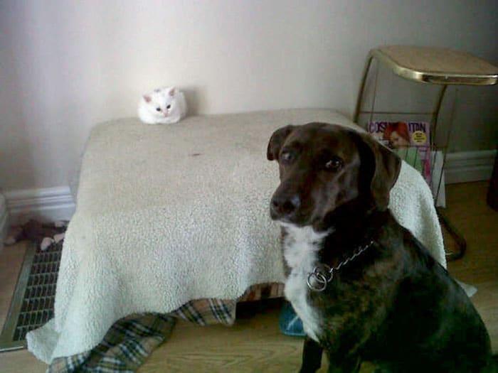 macskák befoglalták a kutyaágyat