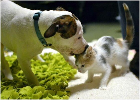 macska fogadta be az árva kutyát