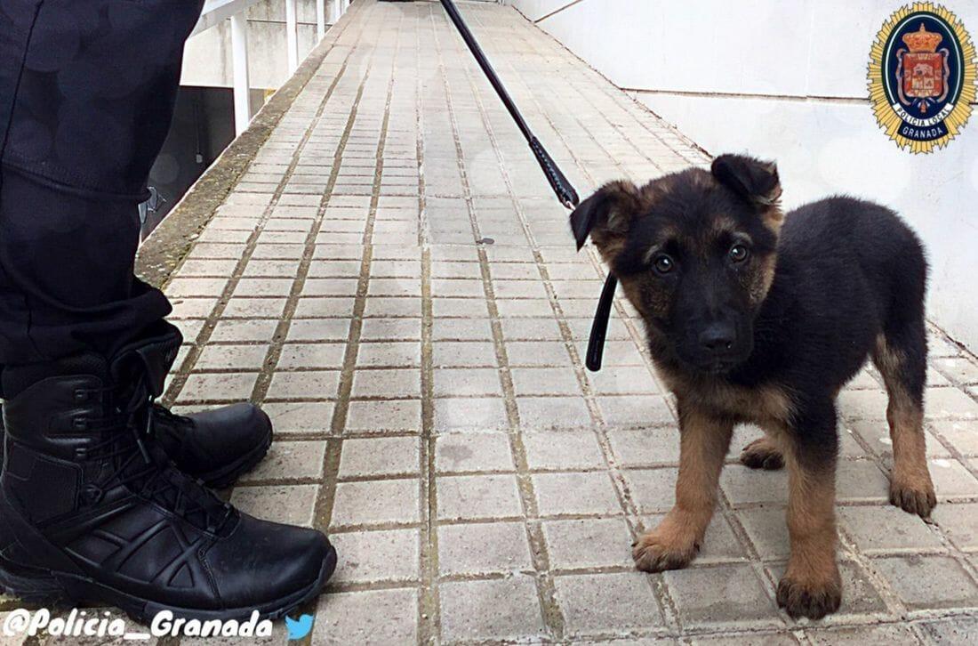 megmentették a kutyát a szörnyű bántalmazótól