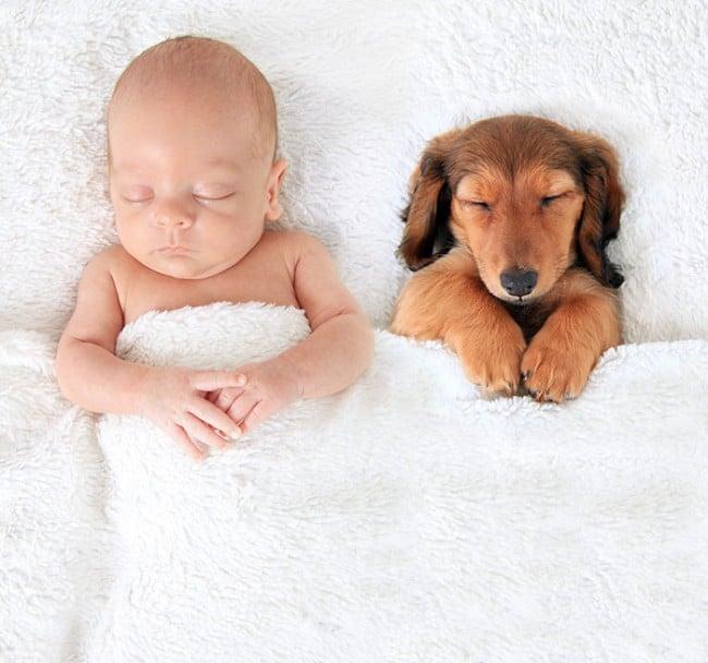 nincs jobb alvótárs egy kiskutyánál
