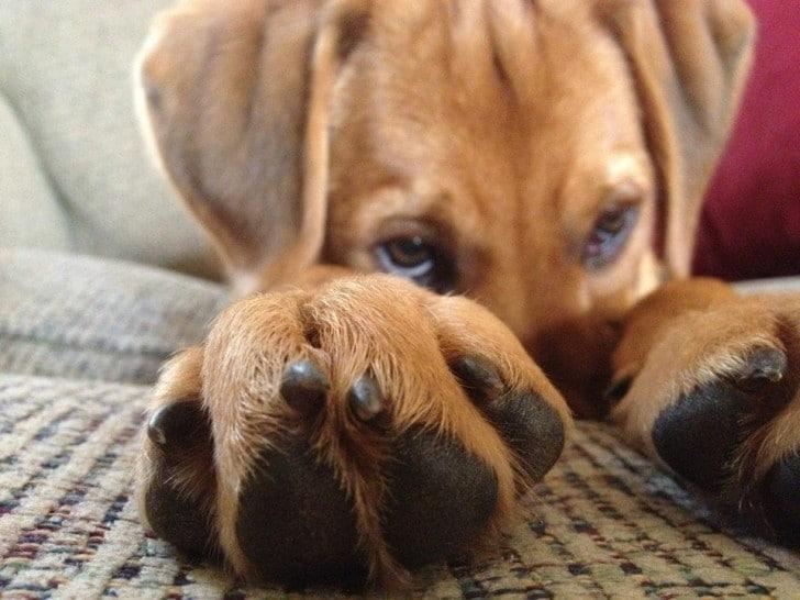 rosszcsont kutya, aki jól játssza az ártatlant