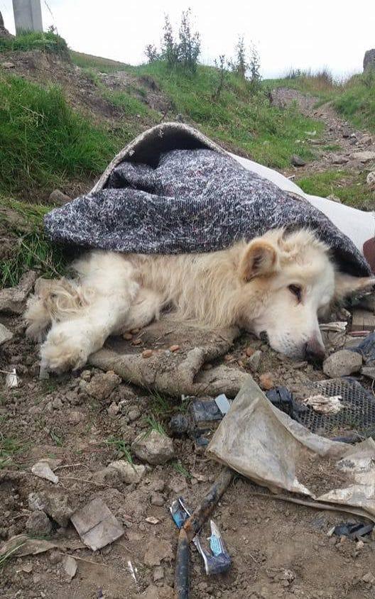 szőnyegbe csavarva dobtak ki egy kutyát