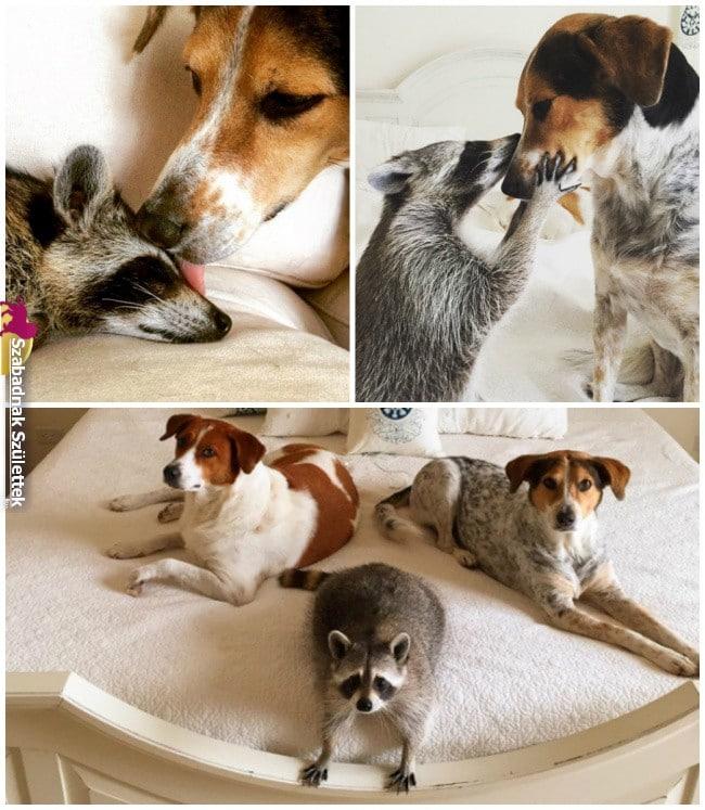 szoros állatbarátságok