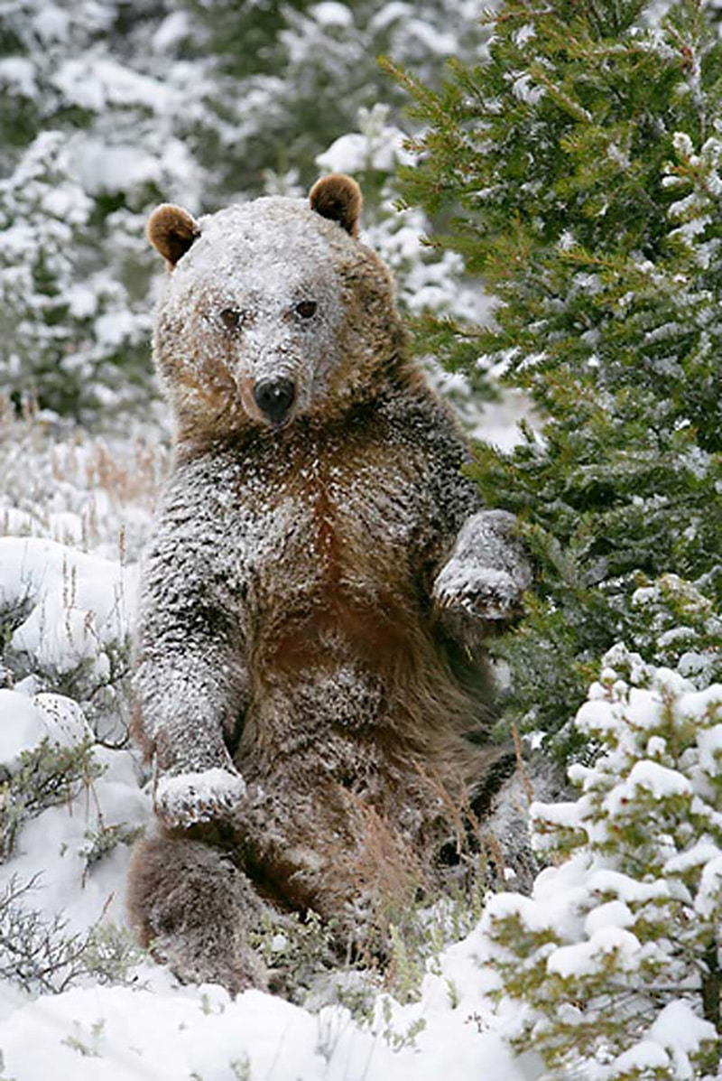 varázslatos téli fotók állatokról