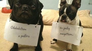 őszinte vallomás kutyáktól