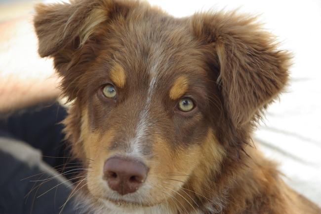 6 dolog, amivel már iszonyúan idegesíted a kutyádat