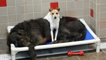A két kóbor kutya elválaszthatatlan a menhelyen