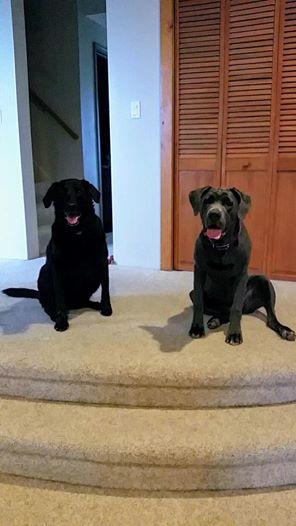 A kutyák halála után a gazdi vissza akarja küldeni a rendelt kutyatápot