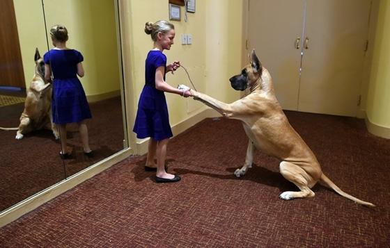 A kutyatulajdonos gyerekek sokkal egészségesebbek