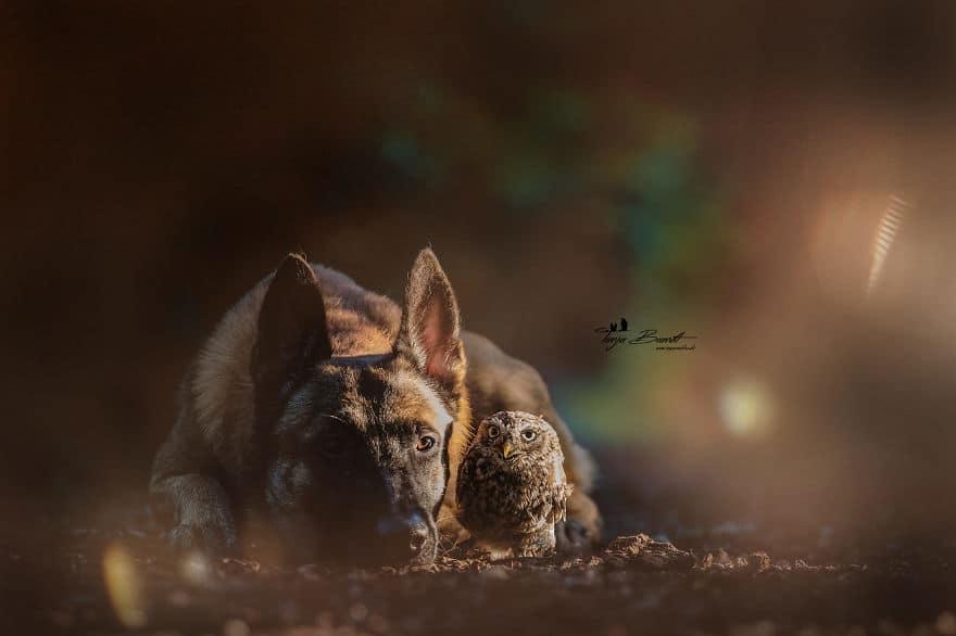 Egy bagoly és egy kutya csodálatos barátsága