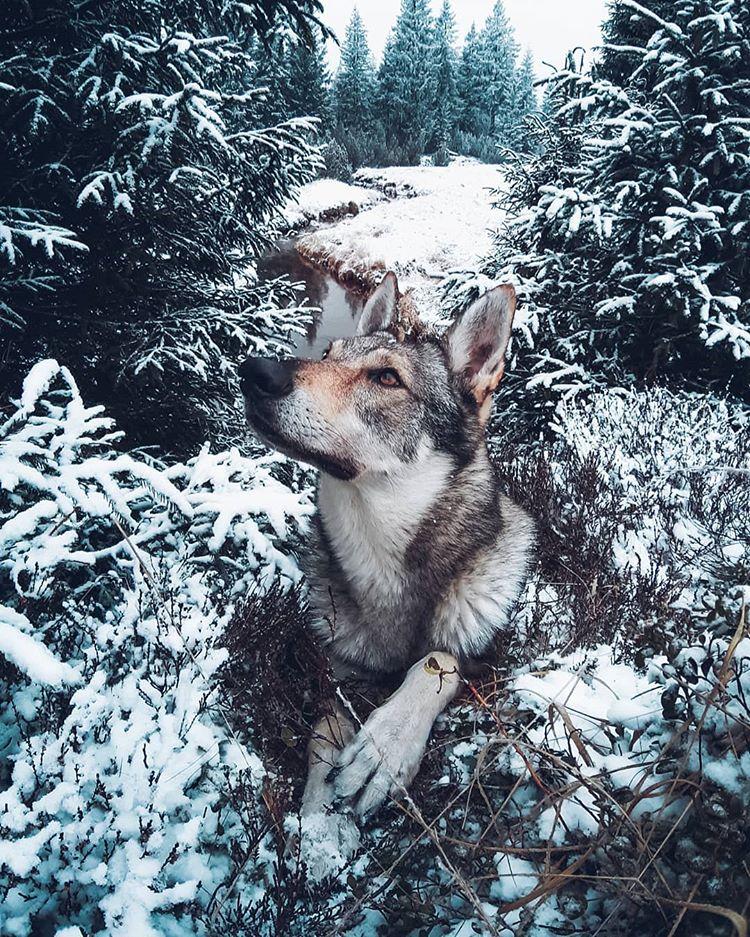 Egy cseh fotós fantasztikus kutyás képei