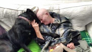 Kutya és gazdája együtt küzdött meg a rákkal