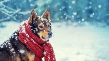 Kutyahideg van - fáznak-e a kutyák
