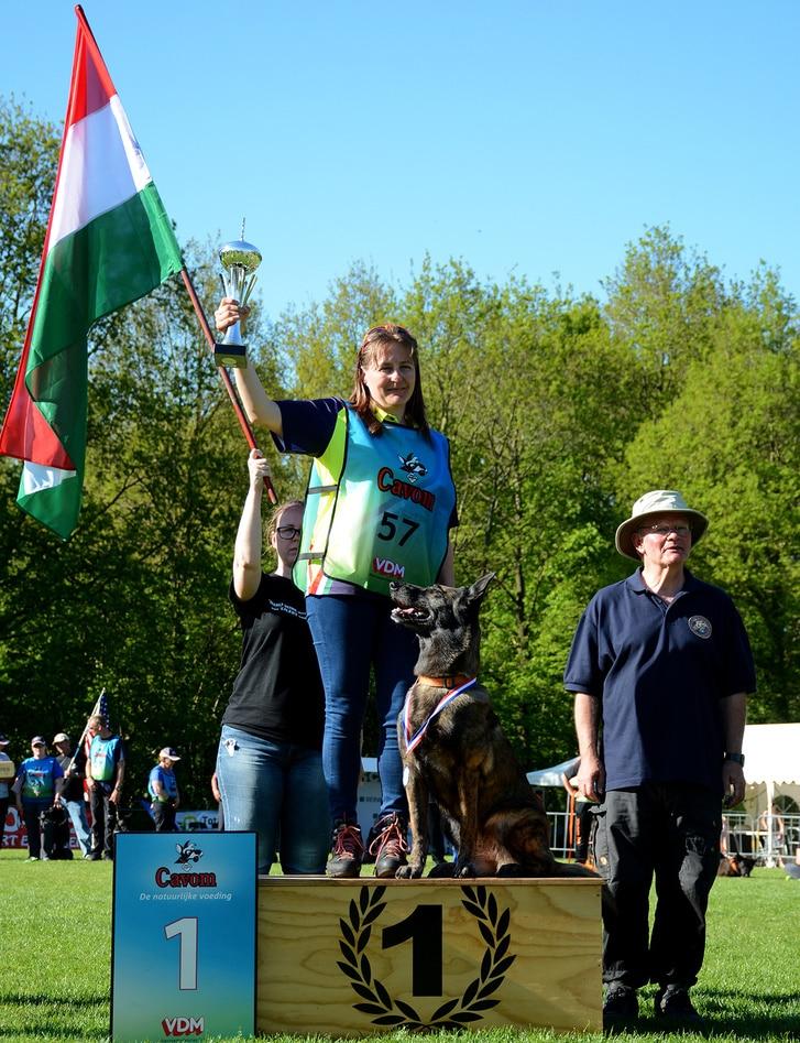 Magyar kutyát választották a világ legjobb mentőkutyájának