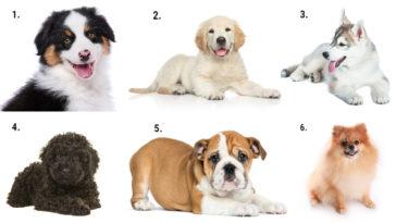 Melyik kutyát választod