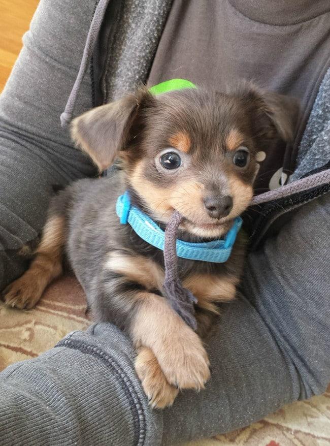 Mentett kutyusok első napja az újdonsült gazdikkal
