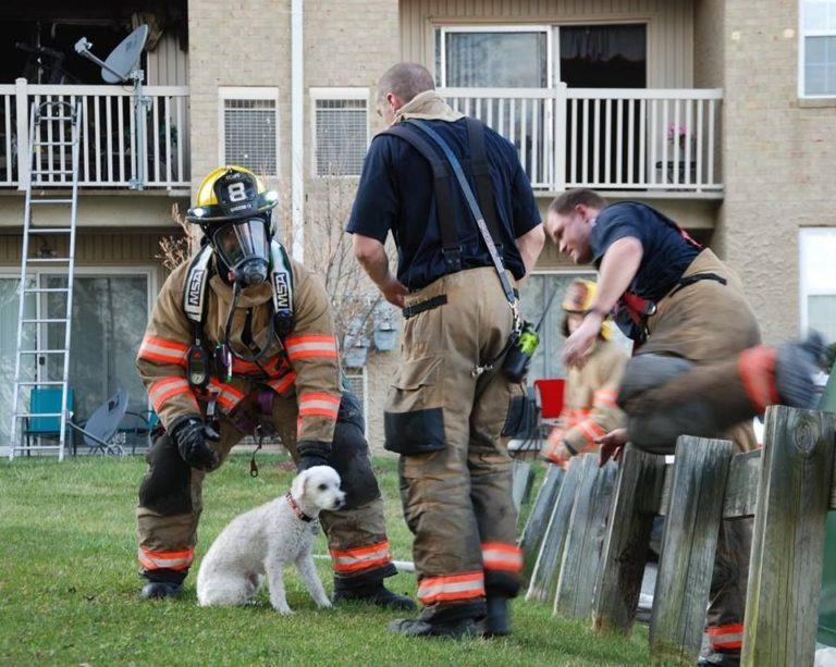 Mosolygott a tűzből kimentett hálás kutyakölyök