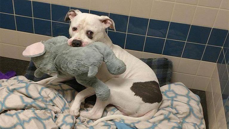 Otthonra talált a plüsselefánttal szomorkodó kutya