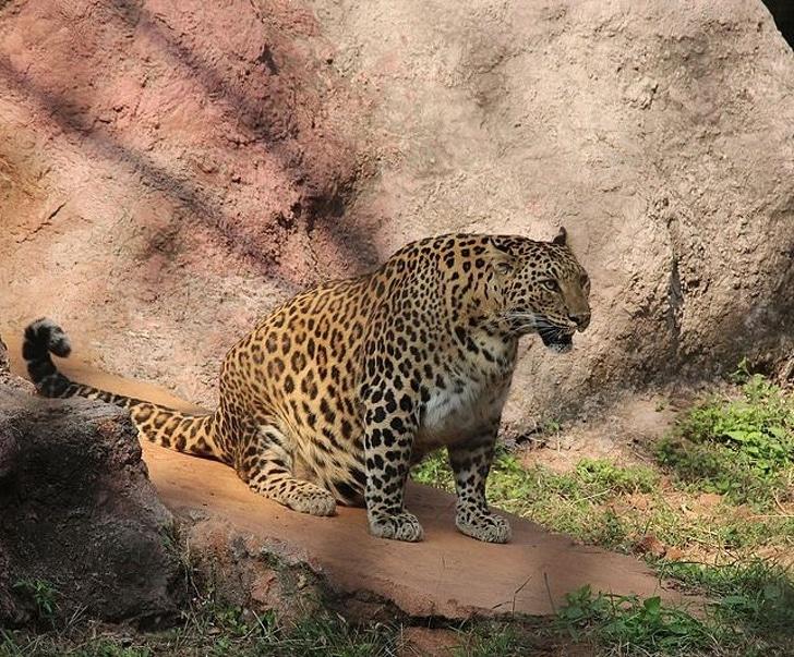az állatok világában is látványos változásokkal jár a vemhesség12