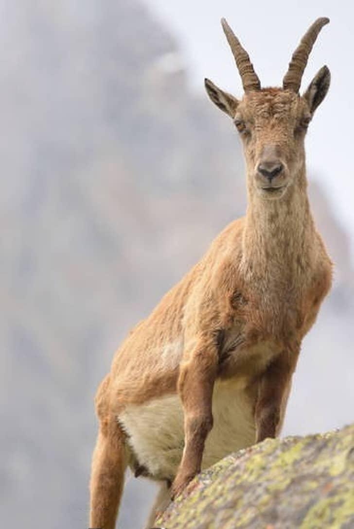 az állatok világában is látványos változásokkal jár a vemhesség13